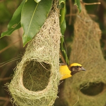 Baya Weaver - True Mathematician