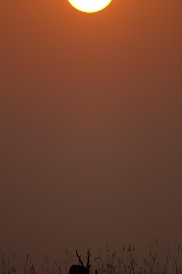 Sunrise at Maidanahalli