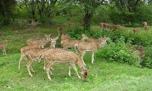bandipur_national_park