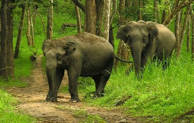 Elephants at Nagarhole Wildlife