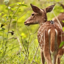 Deer Family at Bandipur