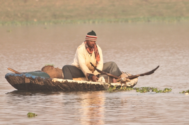 A battle of human and bird to get fish. Brahminy Juv. attack.