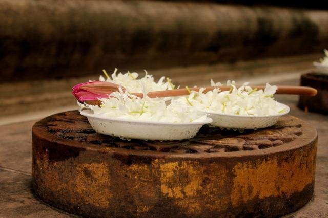 Lotus display in Mahabodhi temple