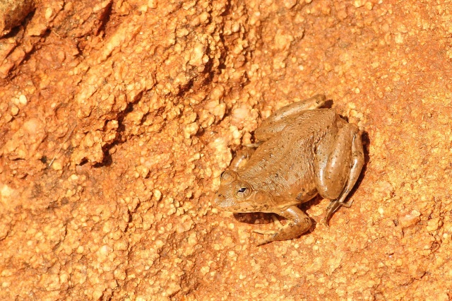 Frog - ID required