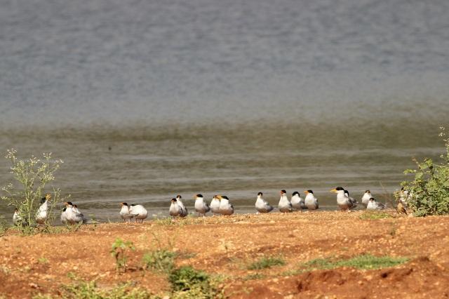 Tern New Generation