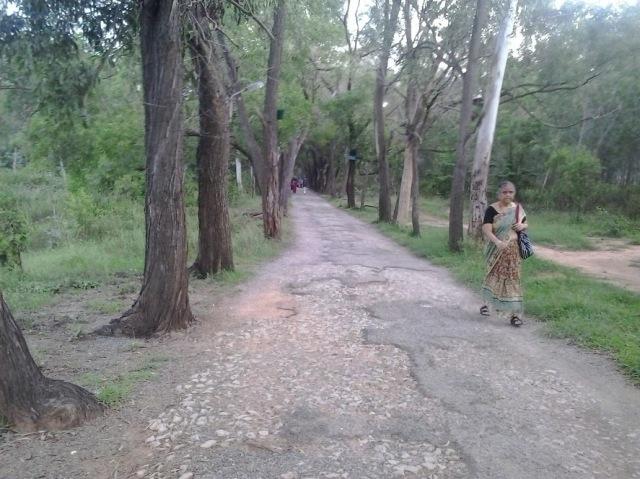 J P Nagar - Mini forest Track